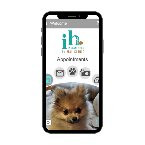 Book appointments at Indian Head Animal Clinic on our mobile app